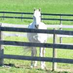 MarBill Hill Farm - Star at Fenceline
