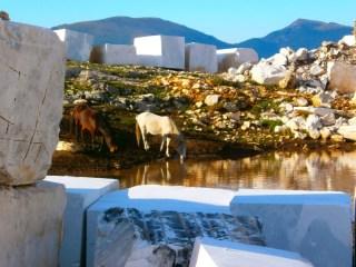 milestone-quarry-wlid-horses-1