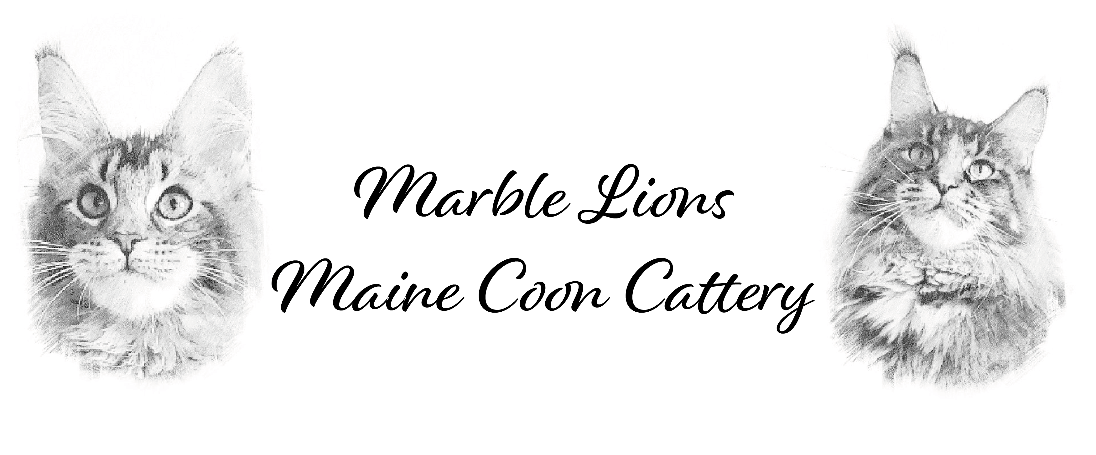 Marble Lions Cattery