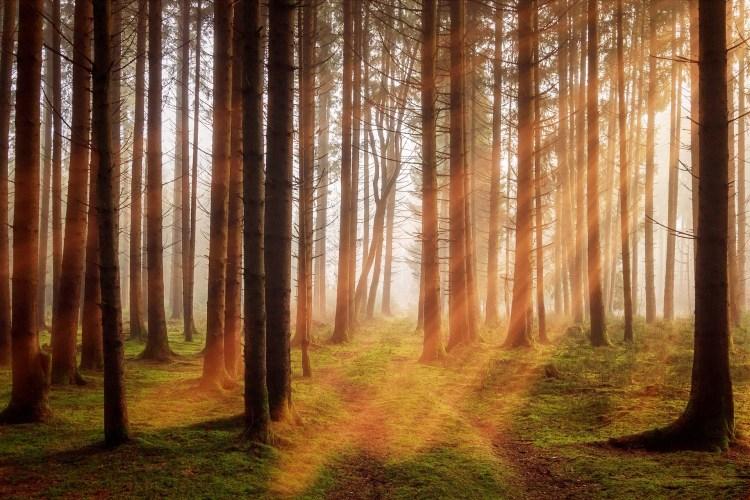 marc-miro-transformacion--liderazgo-desarrollo-personal-coaching-metas-exito-blog-211