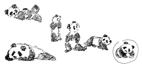 Bocetos del dibujo del panda
