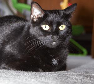 My ten-year-old cat, Beast