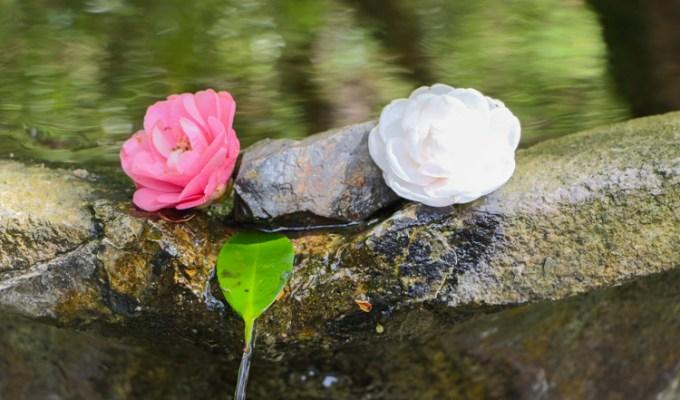 Le préposé aux fleurs du Honen-in
