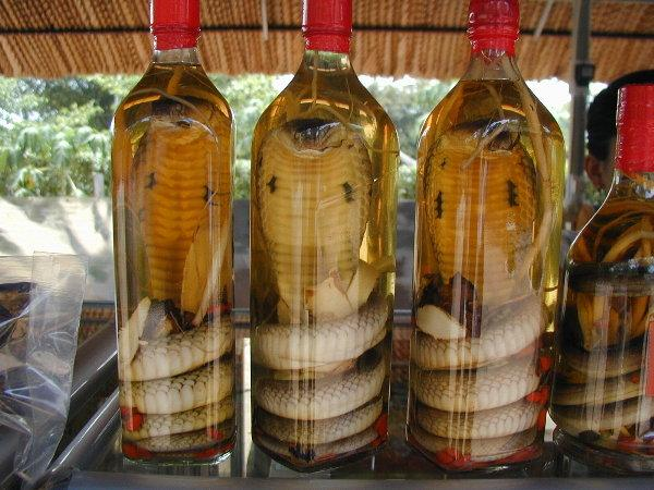 Snake wine and other creepy concoctions