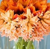 Lieflijke bloemen: de hyacint