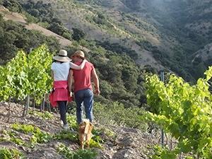 Cazebonne--wijngaard-marcelineke
