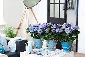 Magical-Amethyst-blauw-WEB-marcelineke
