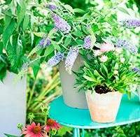 Geniet in augustus van vlinders in je tuin