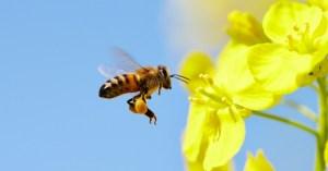 Homeopatia em animais