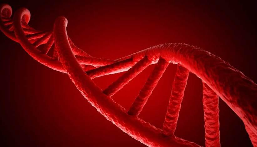 Cadena de Ácido Desoxirribo Nucleico.