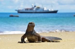 Endeavour iguana