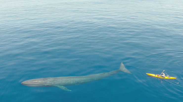 Une baleine croisée lors d'une partie de pêche
