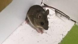 Une souris au BNI du vendredi
