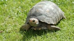 Prendre la tortue de vitesse et se retrouver le cul par terre
