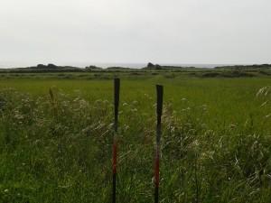 parada técnica, alegrando la vista con el prado tan cerca del mar,
