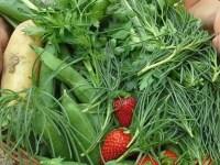 L'orto di Giugno:  semine, trapianti, raccolta