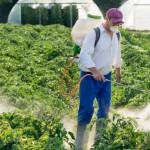 Pesticidi nel piatto