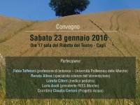 Salute e alimentazione, i pesticidi in agricoltura