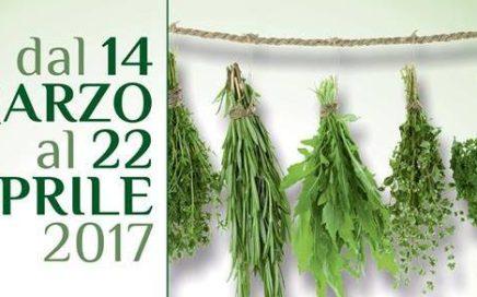 Corso riconoscimento erbe spontanee