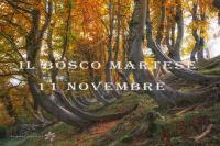 Il Bosco Martese
