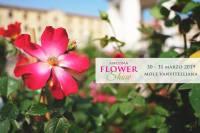 Ancona Flower Show 2019