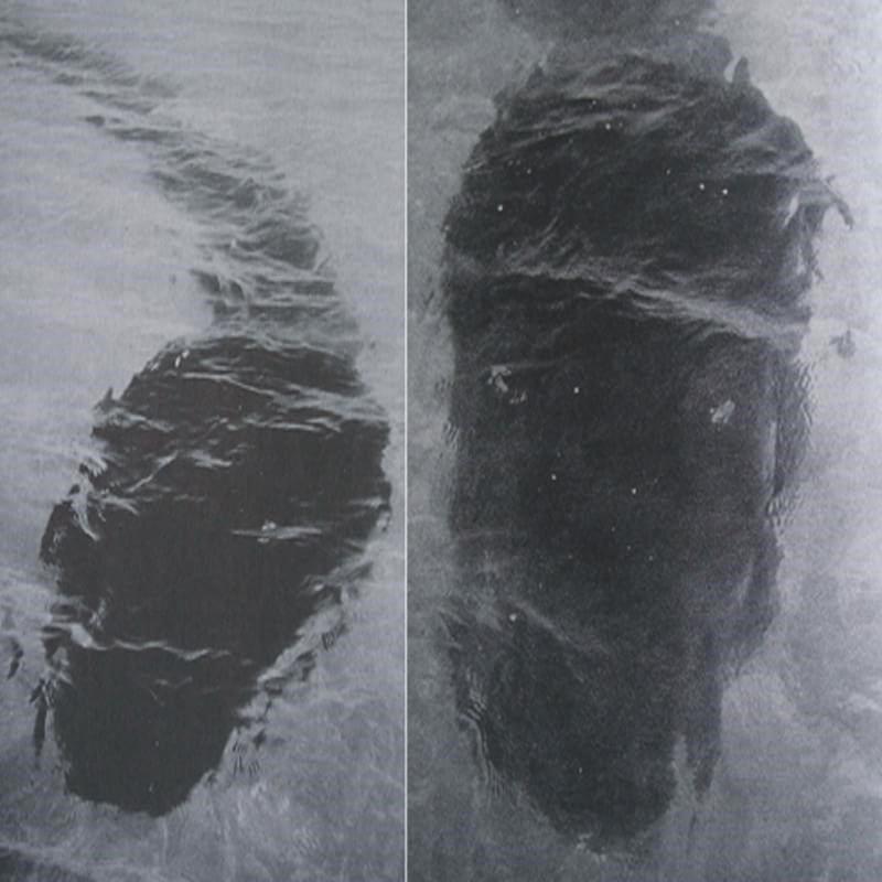 renacuajo gigante mar