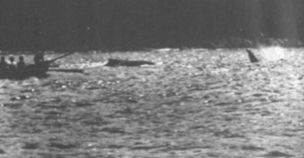 Caceria de ballenas barbadas en eden australia