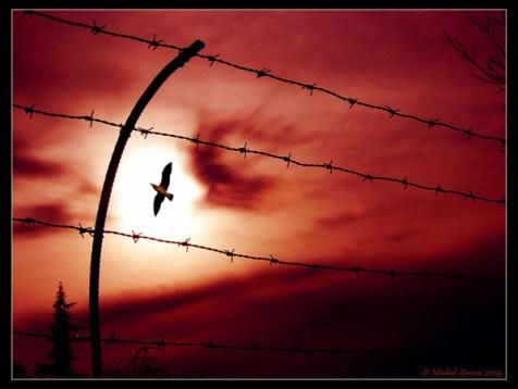 Libertà dietro al filo spinato - fonte:internet