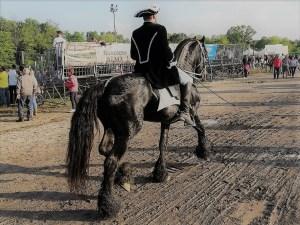 Uno splendido esemplare di Frisone col suo cavaliere