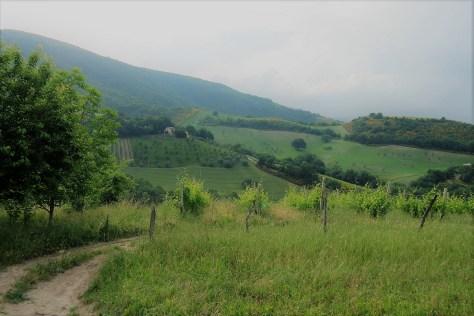 La campagna, le vigne, la natura.