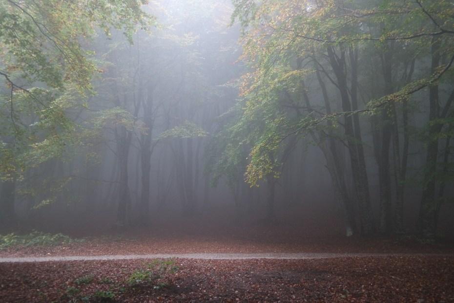 Foresta di faggi con la nebbia - Canfaito - Foto Marco Costarelli