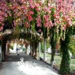 Giardini di Montmartre - Tetto di foglie e colori d'autunno