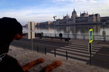 Venus che osserva il panorama sulla sponda del Danubio.