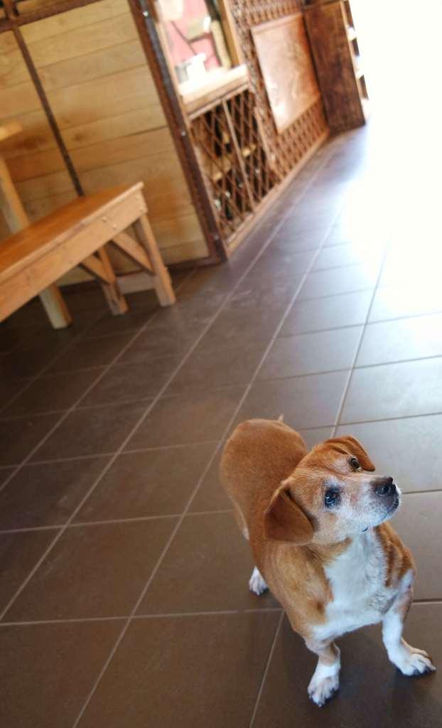 Castelluccio e nient'altro - Lilly che guarda gli ospiti.