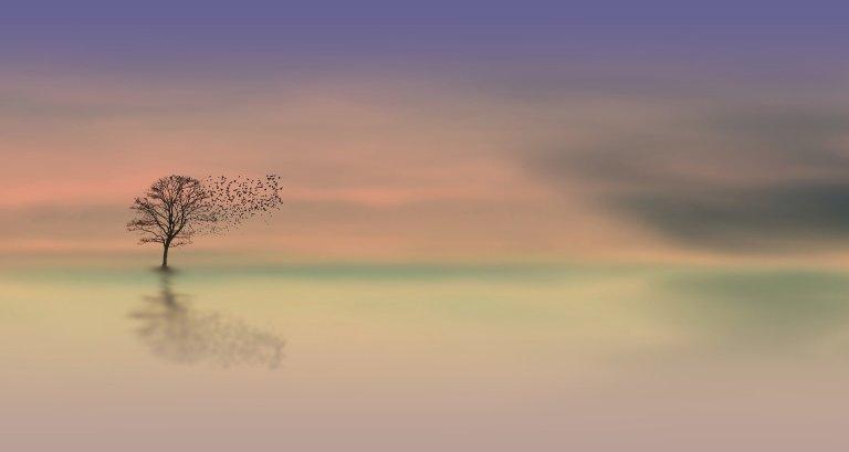 dawn-3358468_1920