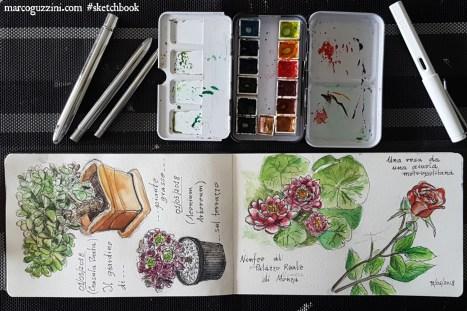 illustrazioni di piante - come disegnare fiori - disegnare dal vero