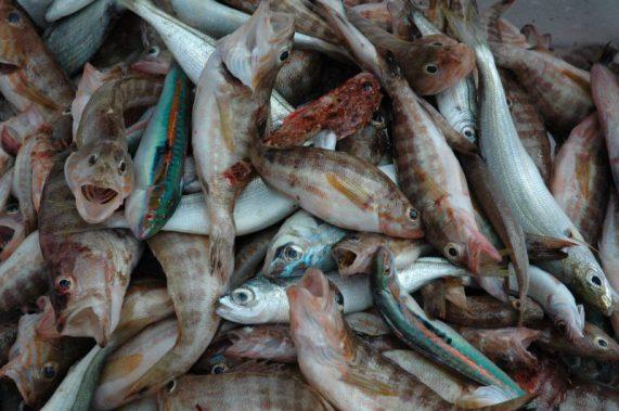 Un discreto carniere di pesci di scoglio misti
