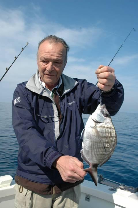 In bel sarago maggiore catturato con un terminale con l'amo pescatore