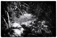 Una piccola sorgente