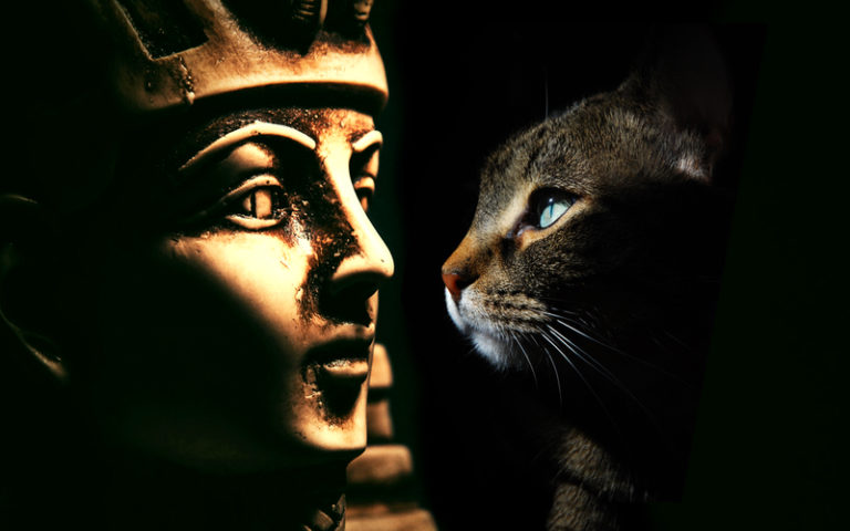 Por qué los egipcios adoraban a los gatos?