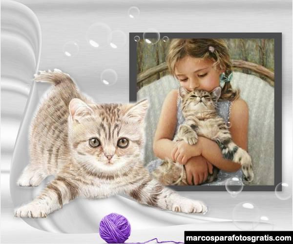 Fotomontajes con gatitos