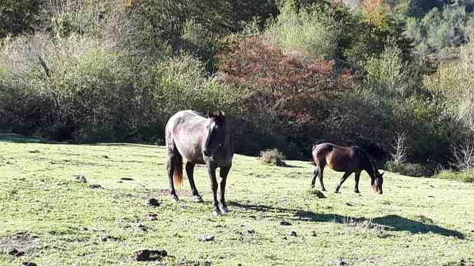 Vegas_Marcosplanet_Rio_Les_Mestaes_Caballos en_Covadonga_Vega_de_Orandi_Asturias