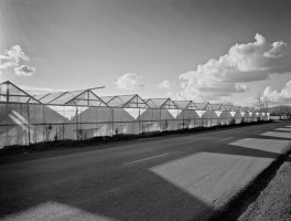 Greenhouse Row
