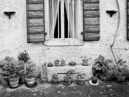 Home Window Garden
