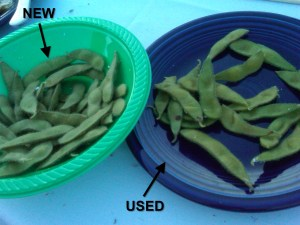 A lesson in edamame