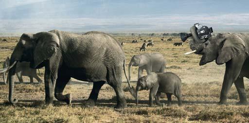 Aos elefantes tamén lles gusta filmar as súas viaxes