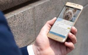 Unha aplicación móbil galega sae ao amparo das mascotas perdidas