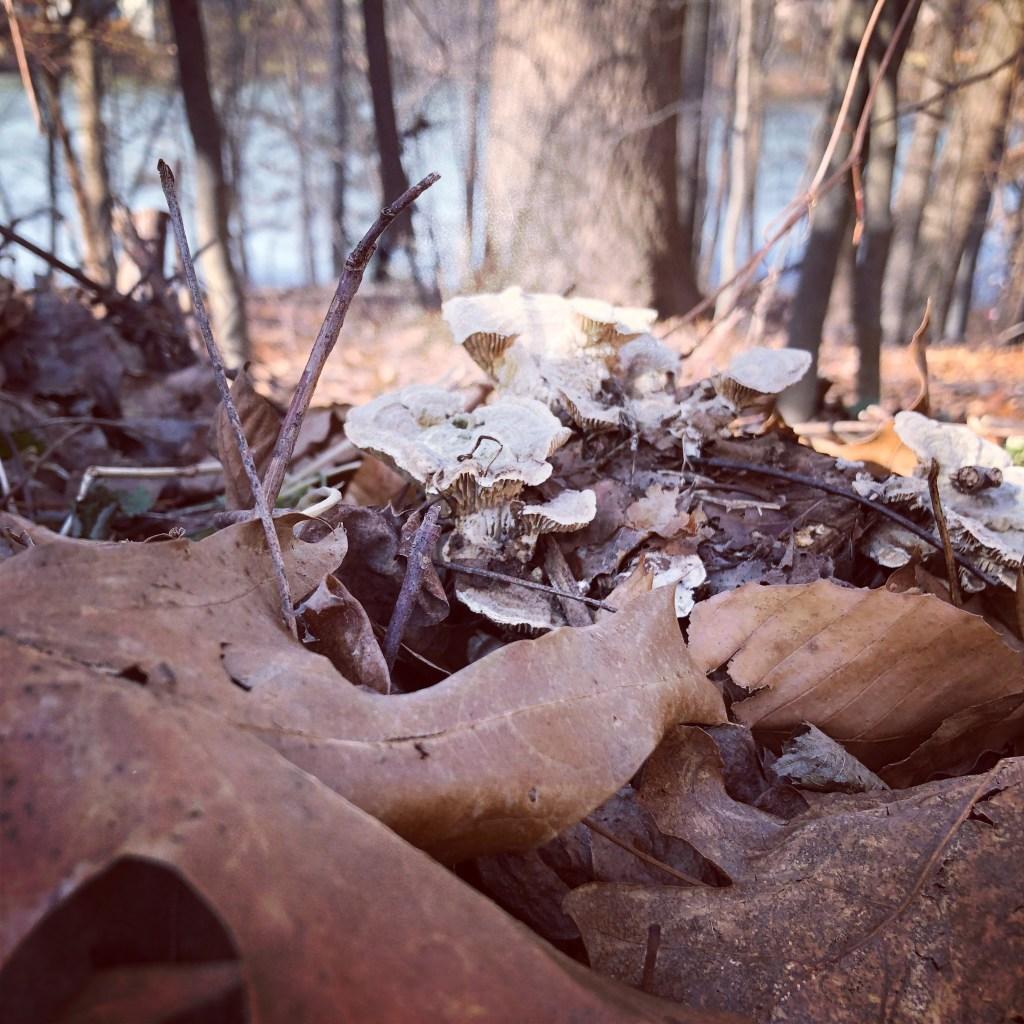Photograph taken on a nature walk.