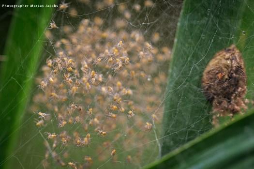 spinnenkinder_1XMJ5680