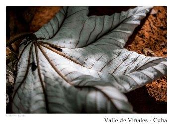 vinales_kuba_104